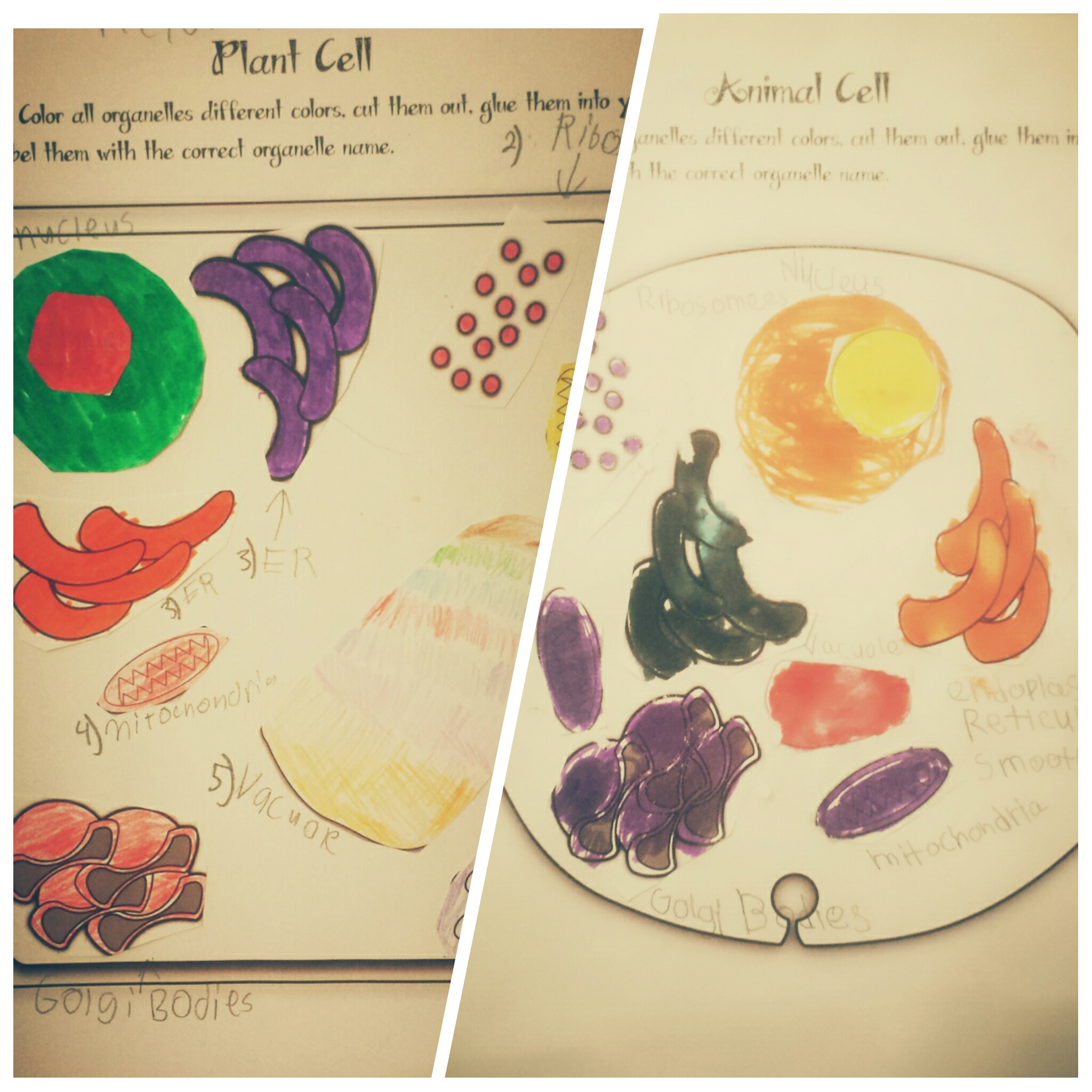 3d Plant Cell Model Project Materials - The students had to cut photogrid_1432776322030